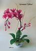 Бисероплетение - Орхидеи-11 из бисера.